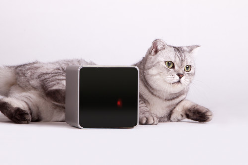 With Petcube, You and Your Pets Can Play, Even When You're Away