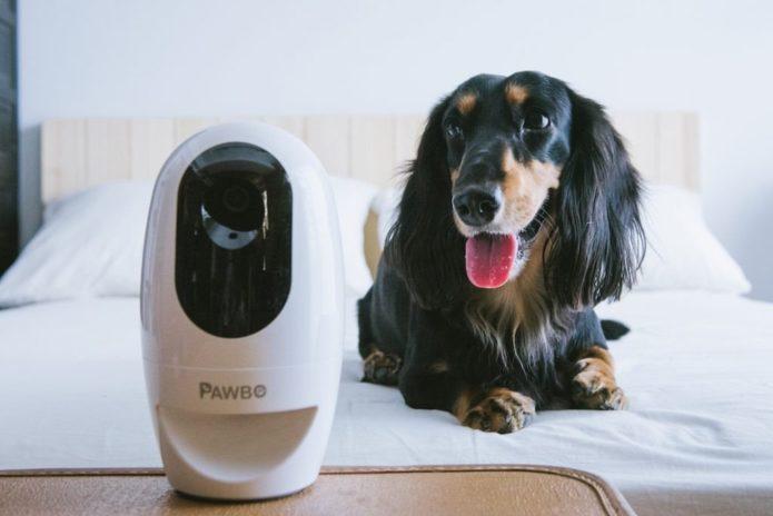 Pawbo+ Review