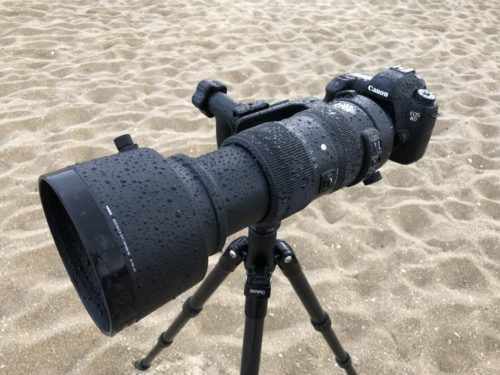 Sigma 60-600mm f/4.5-6.3 DG OS HSM Sport Field Test