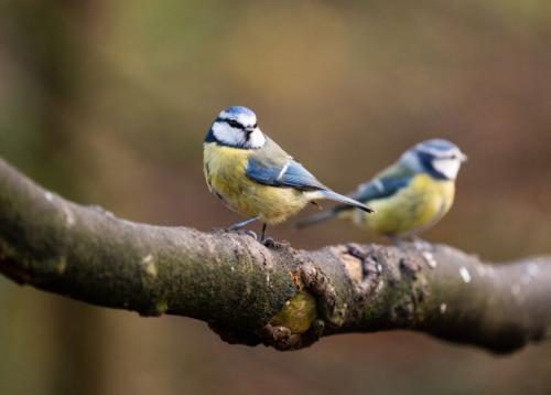 Sony A7 III, A7R III, A9 Settings for Wildlife and Birds