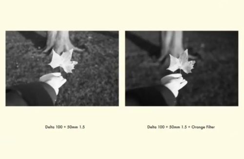 Comparing Different Color Filters for Black and White Film Photography