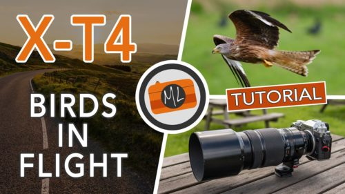 Fujifilm X-T4 and Birds in Flight Review