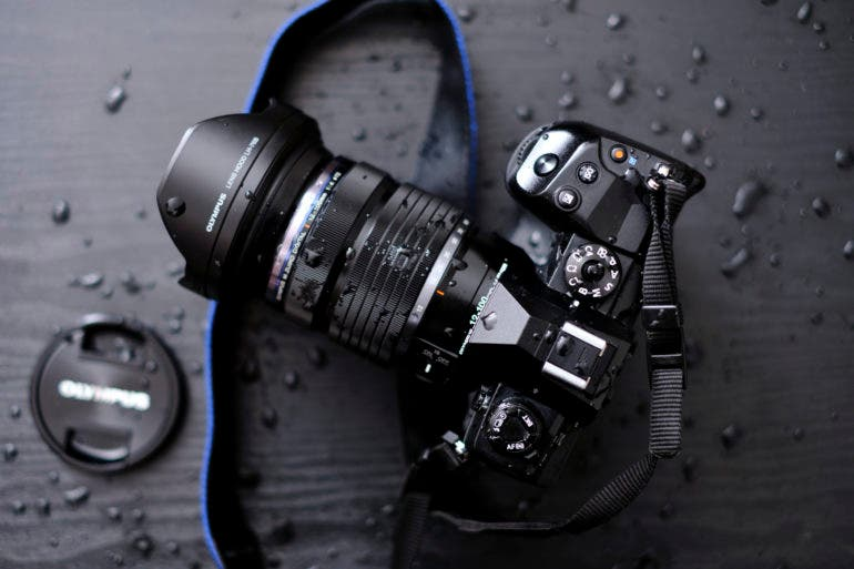 4 Great Mirrorless Cameras Perfect for Bird and Wildlife Photography