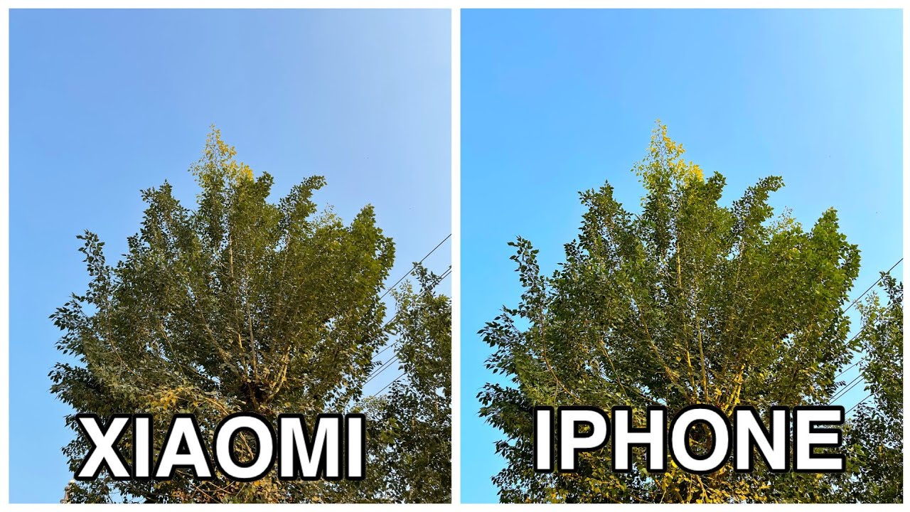 Xiaomi Mi 11 Pro VS iPhone 12 Pro Camera Comparison: Detailed Review