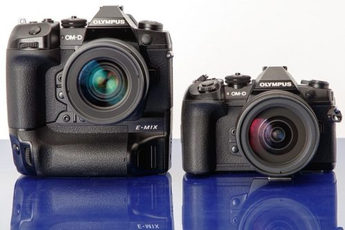 The Best Mirrorless Cameras for Wildlife and Bird Photography – 2021 Round-up