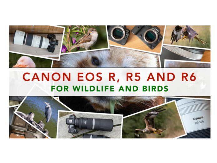 Canon Eos R, R5 and R6 for Wildlife